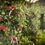 It's Not A Fairytale: Seattle To Build Nation's First Food Forest thumbnail