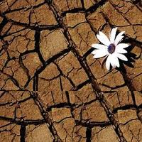 Building Resilience In Climate Change, By Richard Heinberg