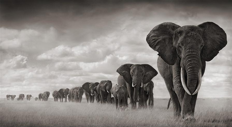 How The Current Mass Extinction Of Animals Threatens Humans, By Simon Worrall